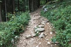 2017_cassinelli_sentiero3